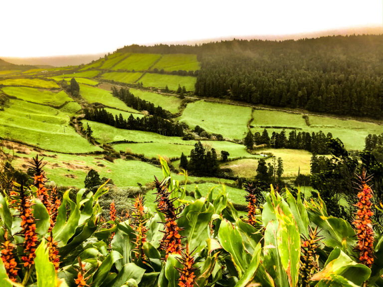 The Azores - green nature