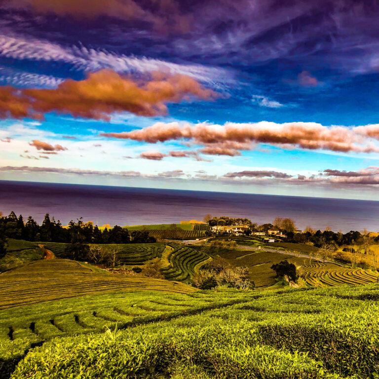 Azoren - Chá Gorreana Tea plantation