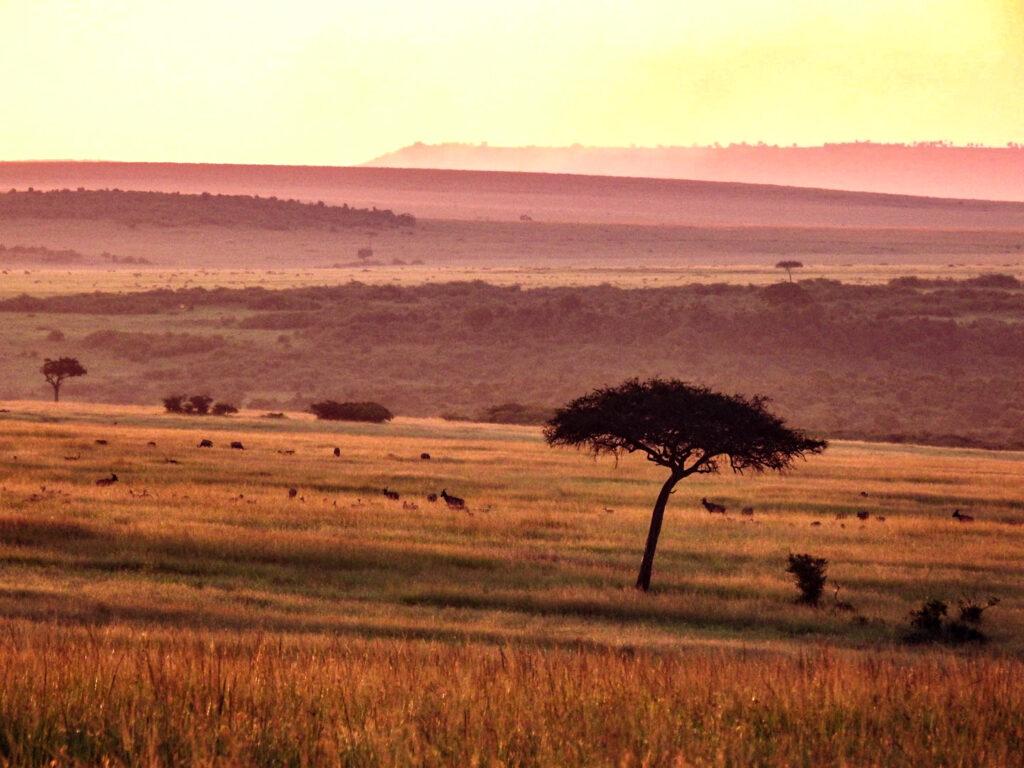 View Masai Mara