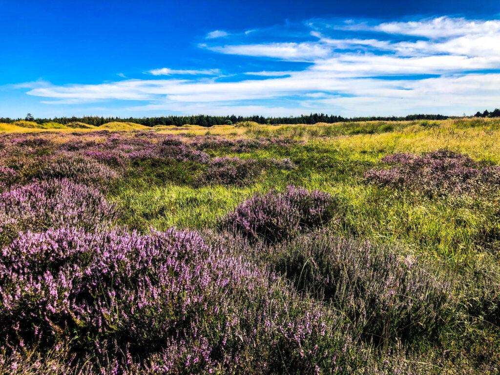 Stensbaekplantage - Ribe | Denmark